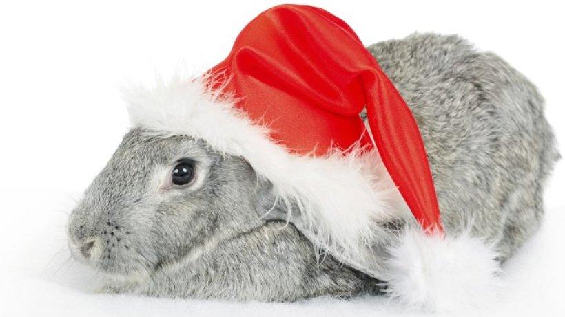 die sch nsten fotos von tieren zu weihnachten bild der frau. Black Bedroom Furniture Sets. Home Design Ideas